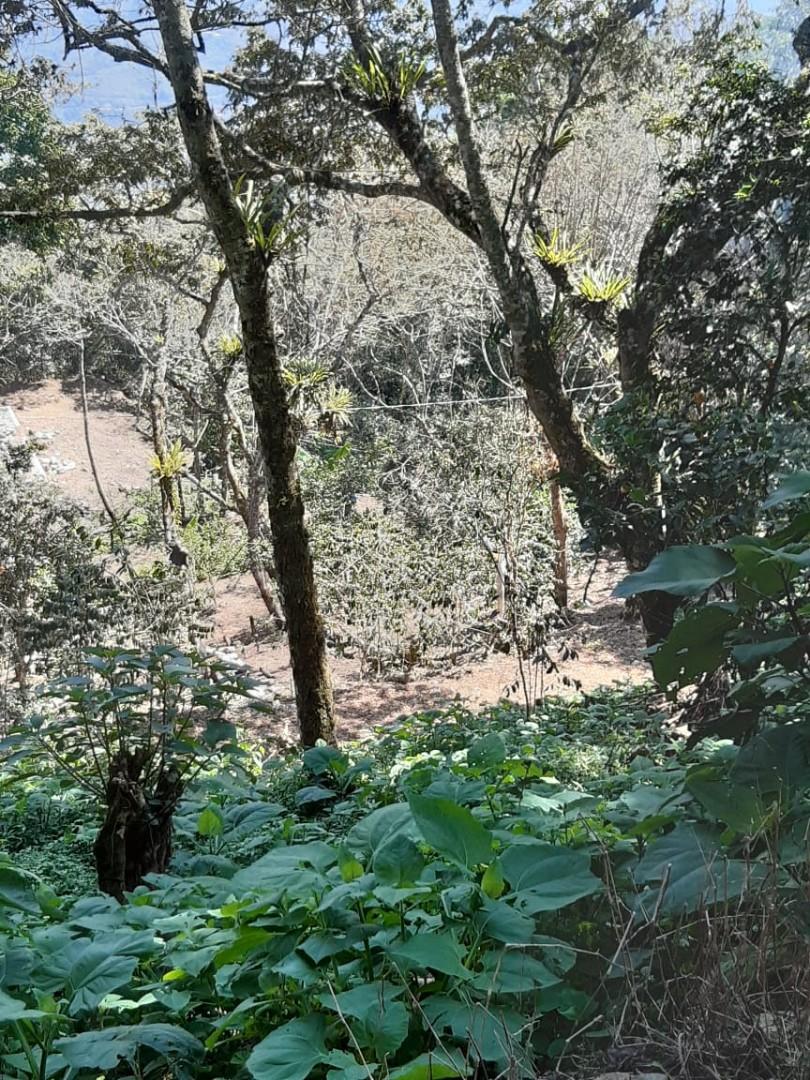Terreno en Venta Coroico Foto 8