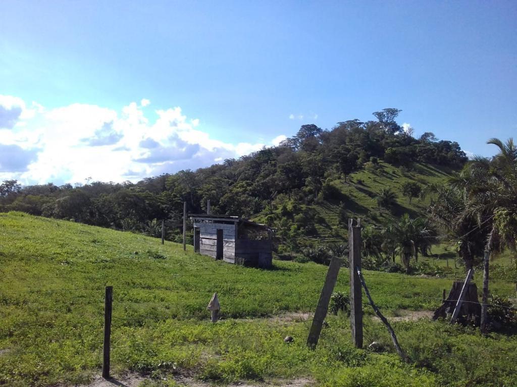 Quinta propiedad agrícola en Venta San Javier - Propiedad Ganadera Foto 3