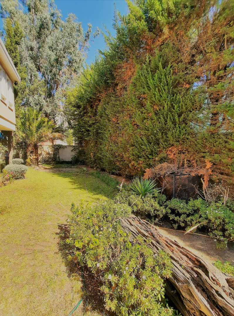 Casa en Alquiler Calle 10 de Calacoto casi esq Av. Costanera Foto 7